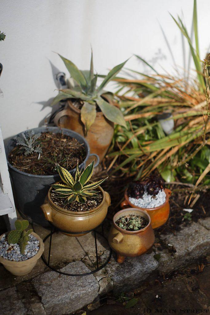 Poteries vintage converties en pots de fleurs insolites