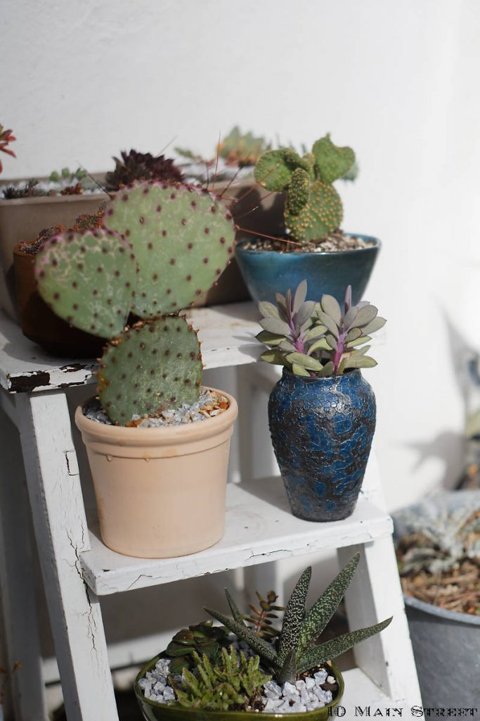 Assortiment de pots de fleurs et de poteries converties