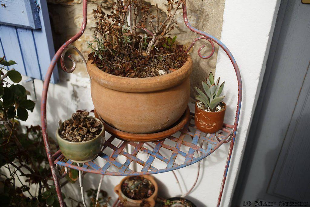 Plantes grasses dans des gobelets