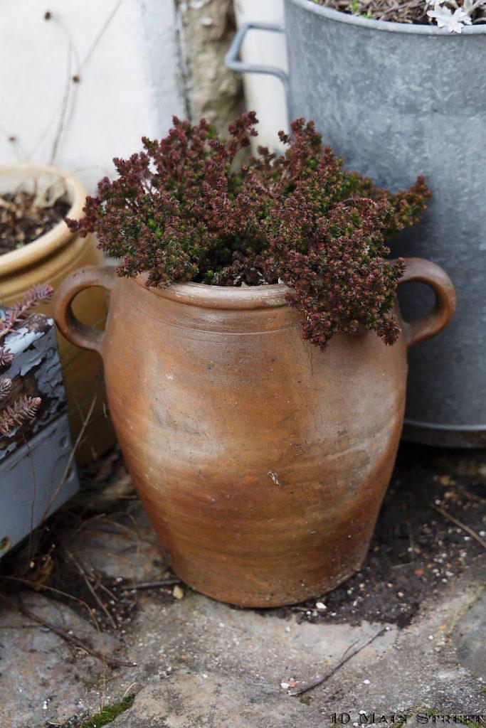 Sedum moranense dans une poterie vintage à oreilles