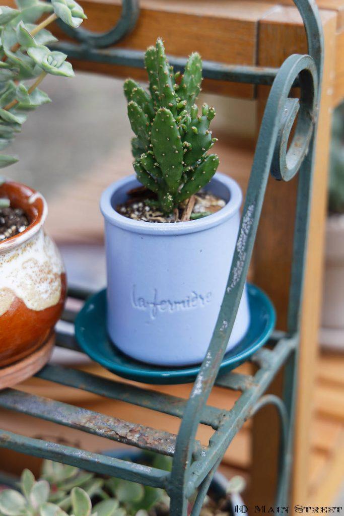 Cactus dans un pot de yaourt