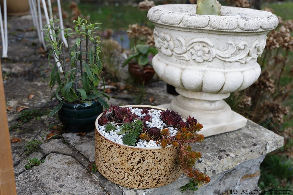 Sempervivums et sedums rustiques dans un contenant en grès d'origine inconnue