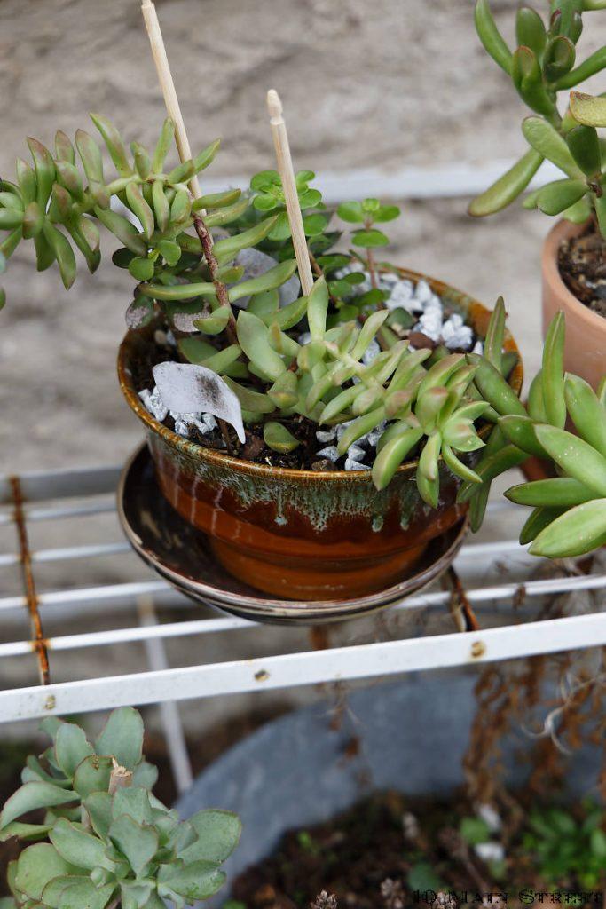 Assortiment de succulentes dans une poubelle de table percée