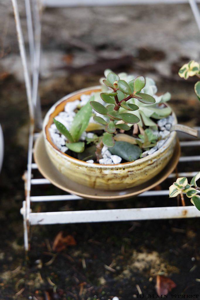 Poubelle de table contenant une composition de plantes grasses