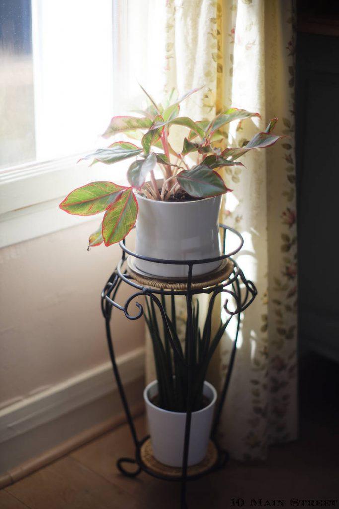Porte-plantes retapé, avec un aglaonema prosperity et un sansevieria bacularis