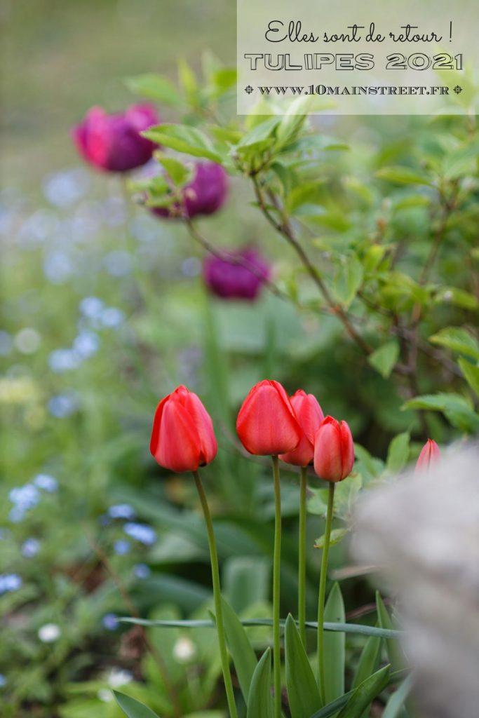 Tulipes 2021 : elles sont de retour !