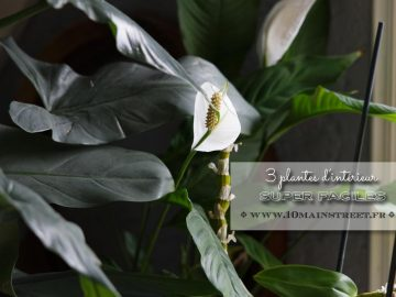 3 plantes super faciles pour votre intérieur