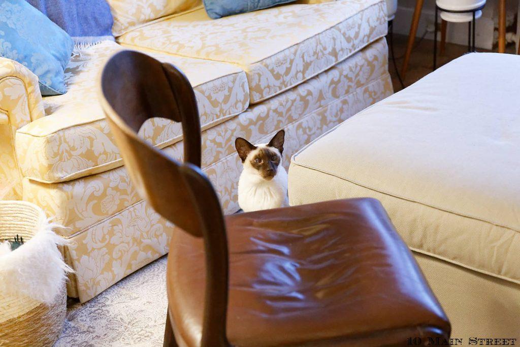 Dinah choquée par l'état de la chaise