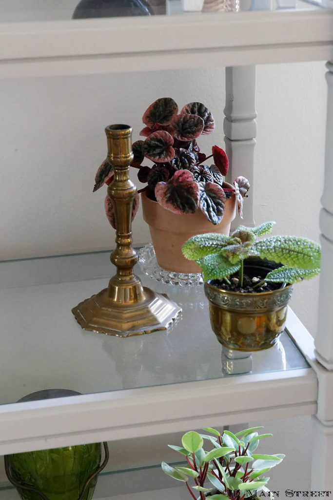 Petites plantes dans l'étagère