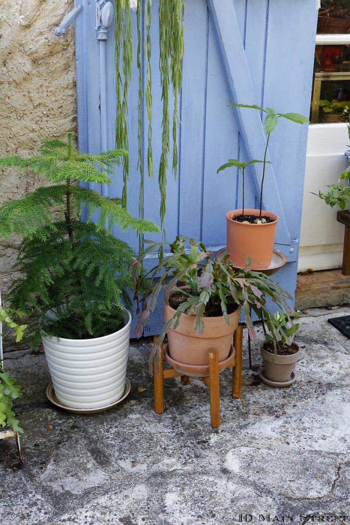 Plantes sur la terrasse