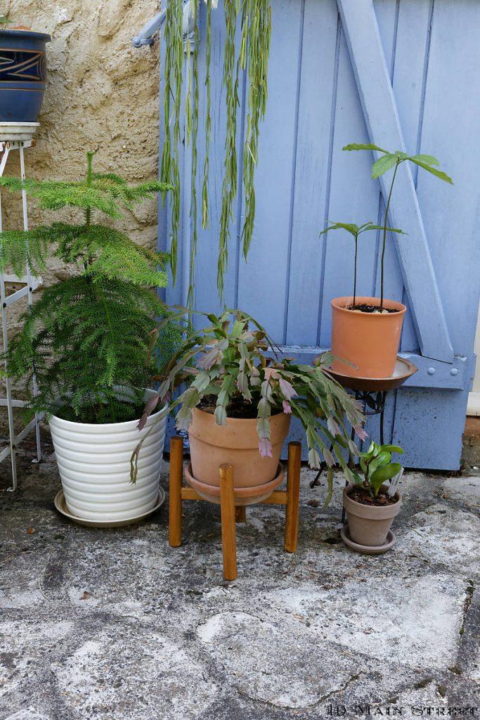 Plantes sur des supports