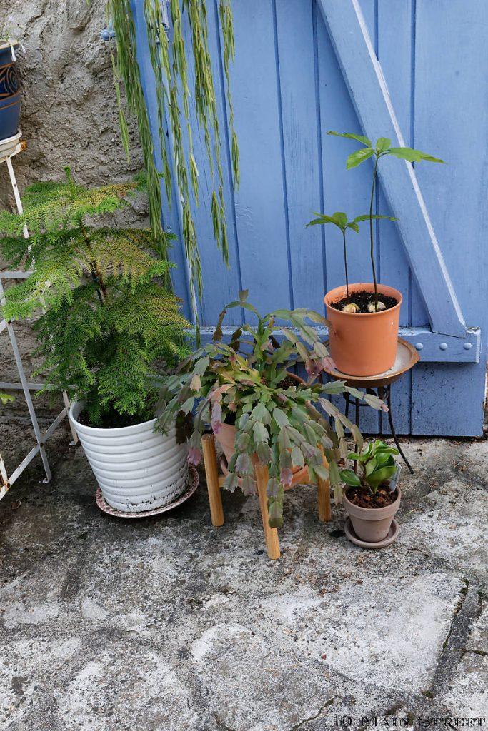 Plantes posées sur des supports