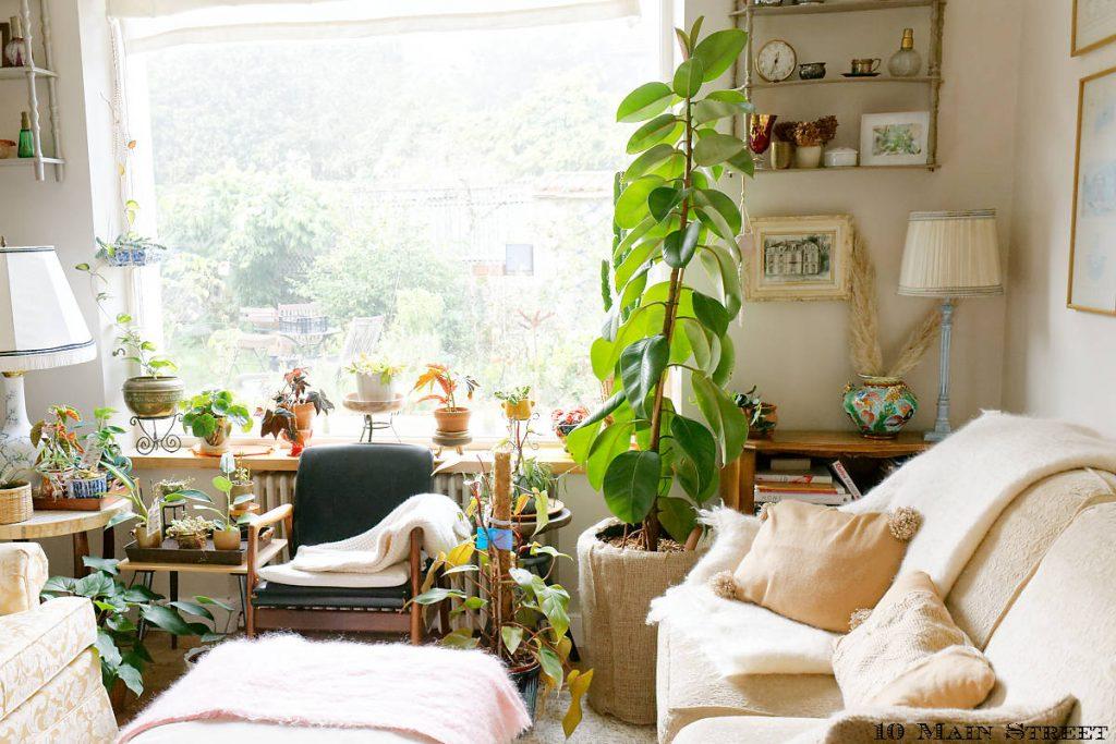 Le salon plein de plantes