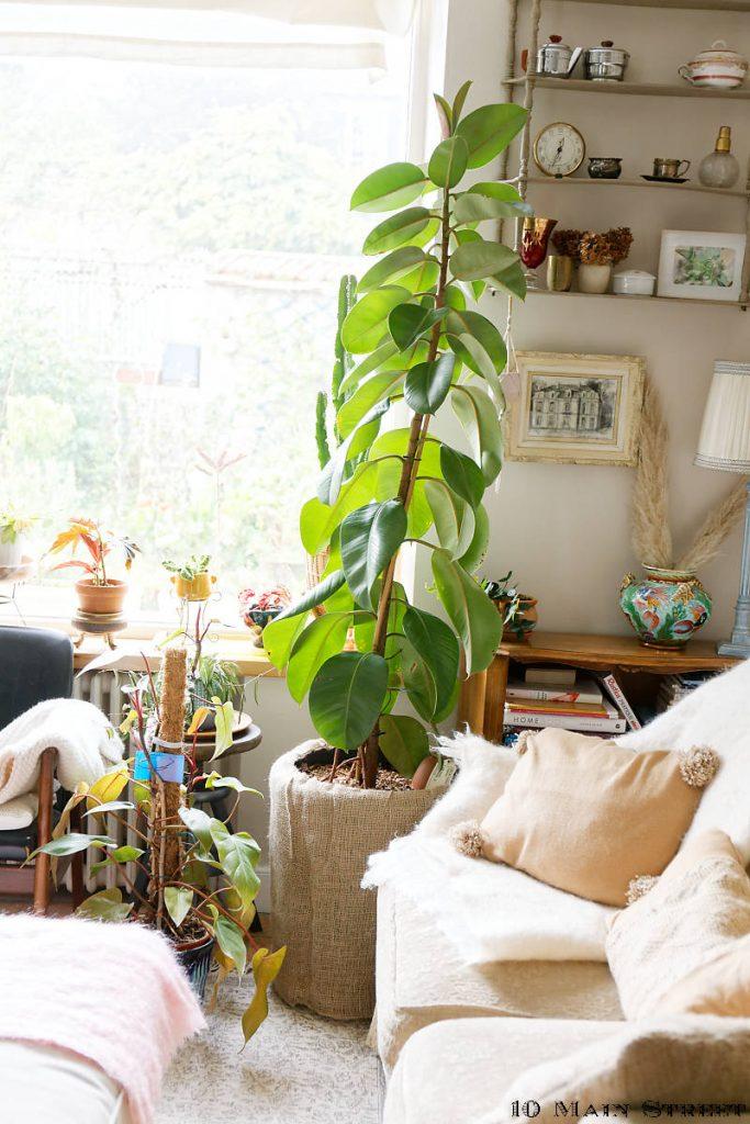 Les plantes du salon